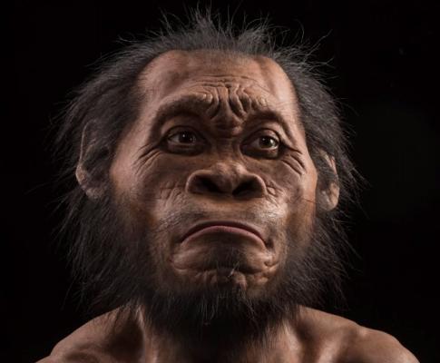Homo Naledi: découverte d'une nouvelle espèce du genre humain
